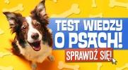 Test wiedzy o psach!