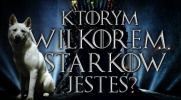 Którym wilkorem Starków jesteś?