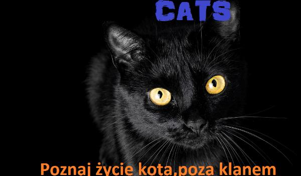 Cats-historia z podwórka #1 (zakończona)