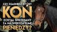 Czy rozpoznasz konia sprzedanego za największą sumę pieniędzy?