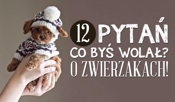 12 pytań o zwierzętach!