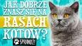 Jak dobrze znasz się na rasach kotów? #1