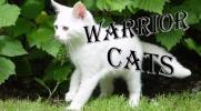 Warrior Cats-Rozdział IV
