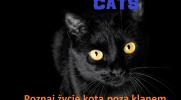 Cats-historia z podwórka #4