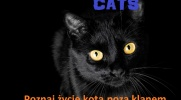 Cats-historia z podwórka #2