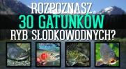 Czy uda Ci się rozpoznać 30 gatunków ryb słodkowodnych?