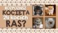 Czy rozpoznasz kocięta różnych kocich ras?