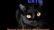Cats-historia z podwórka #5 Święta