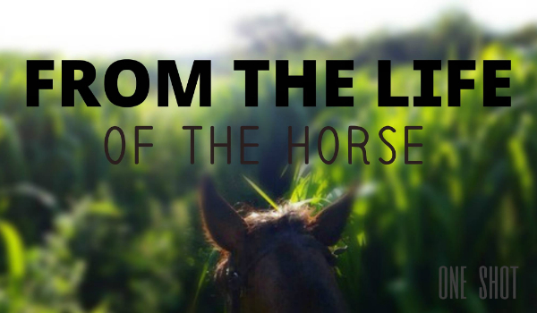 From the life of the horse