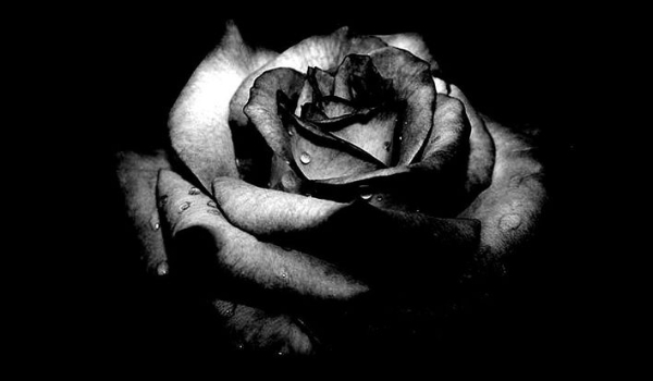 Black Rose #0