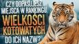 Czy dopasujesz miejsca w rankingu wielkości kotowatych do ich nazw?
