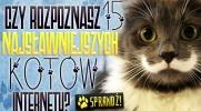 Czy rozpoznasz 15 najsławniejszych kotów internetu?