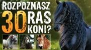 Czy rozpoznasz 30 ras koni?