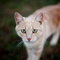 Który Kot Z Klanu Pioruna Jest Twoją Bratnią Duszą
