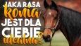 Jaka rasa konia jest dla Ciebie idealna?