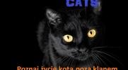 Cats-historia z podwórka #8 Koniec czy dopiero początek..?
