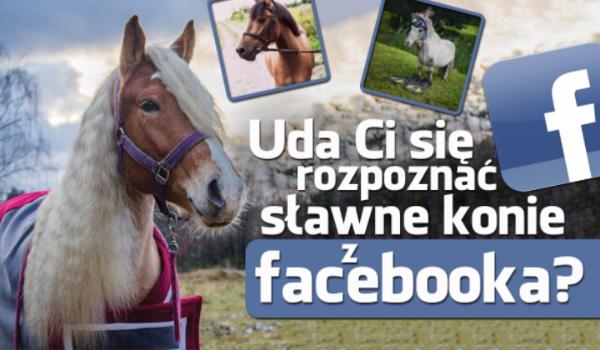 Czy odgadniesz wszystkie konie z Facebooka?