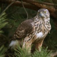 Czy Rozpoznasz Drapieżne Ptaki żyjące W Polsce