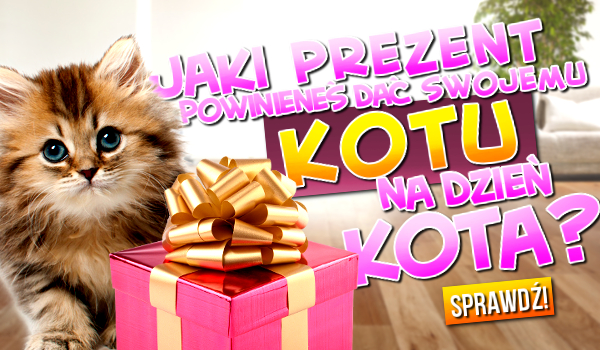 Jaki prezent powinieneś dać swojemu Kotu na Dzień Kota?