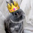 PrincessBunny