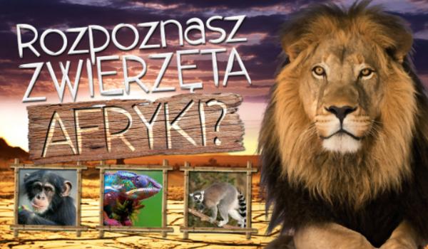 Rozpoznasz zwierzęta Afryki?
