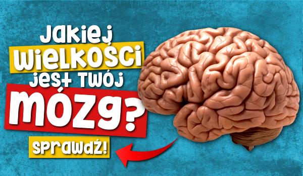 Jakiej wielkości jest Twój mózg?