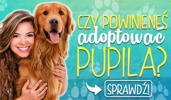 Czy powinieneś adoptować pupila?