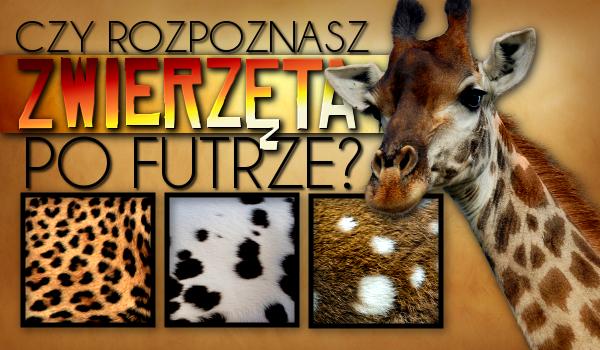Czy potrafisz rozpoznać zwierzaka po futrze?