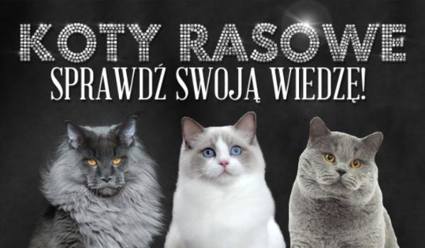Koty rasowe – Sprawdź swoją wiedzę!