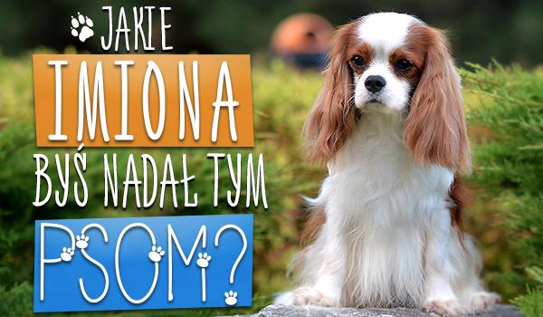 Jakie imiona byś nadał tym psom?