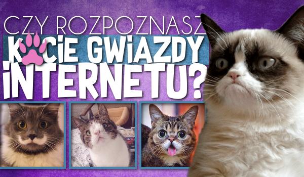 Czy rozpoznasz kocie gwiazdy Internetu?