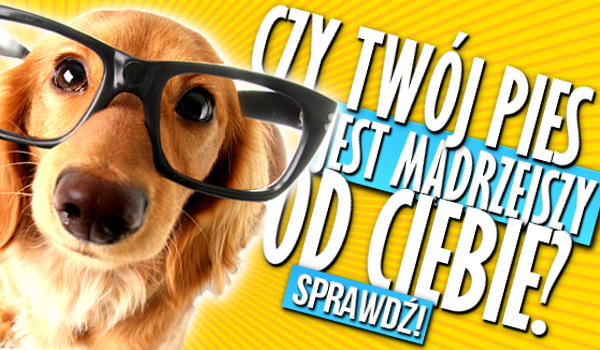Czy Twój pies jest mądrzejszy od Ciebie?