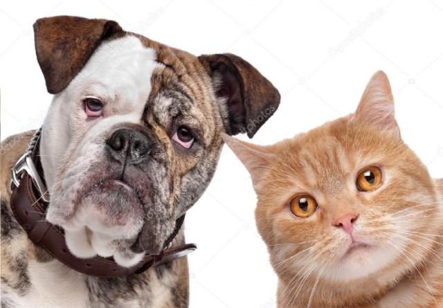 Jesteś Bardziej Jak Pies Czy Jak Kot