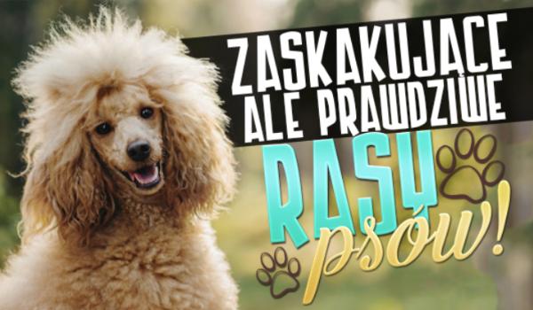 Zaskakujące, ale prawdziwe rasy psów!