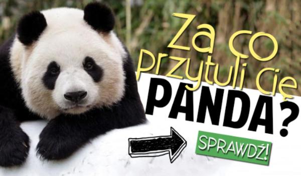 Za co przytuli Cię Panda?