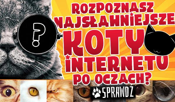 Czy rozpoznasz najsławniejsze koty Internetu po oczach?