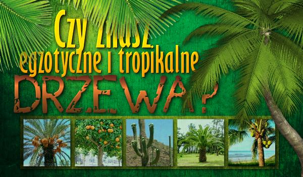 Czy znasz egzotyczne i tropikalne drzewa?
