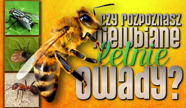 Czy rozpoznasz nielubiane letnie owady?