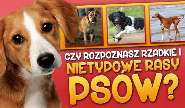 Czy rozpoznasz rzadkie i nietypowe rasy psów?
