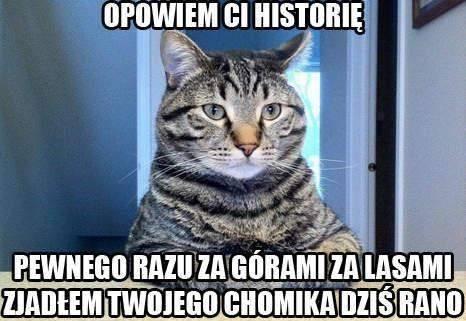 Znalezione obrazy dla zapytania memy o kotach