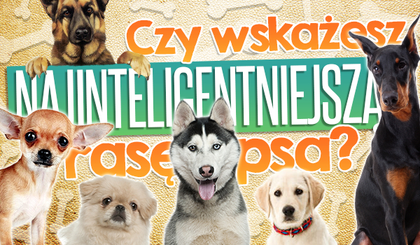 Czy uda Ci się wskazać najinteligentniejszą rasę psa?