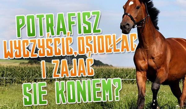 Potrafisz zająć się koniem?