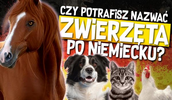 Czy potrafisz nazwać zwierzęta po niemiecku?