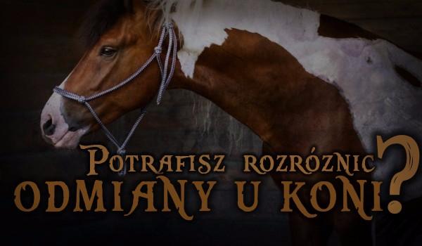 Potrafisz rozróżnić odmiany u koni?