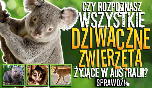 Czy rozpoznasz wszystkie dziwaczne zwierzęta żyjące w Australii?