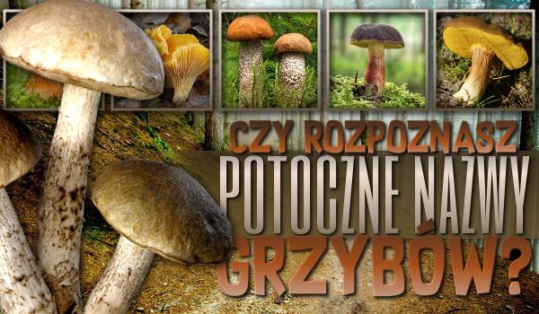 Czy dopasujesz potoczne nazwy do grzybów?