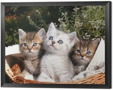 Jakie Koty Wolisz