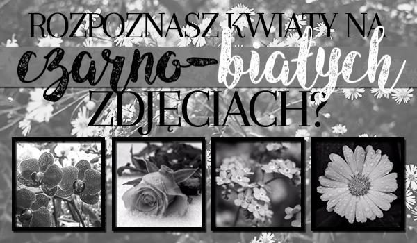 Rozpoznasz kwiaty na czarno-białych zdjęciach?