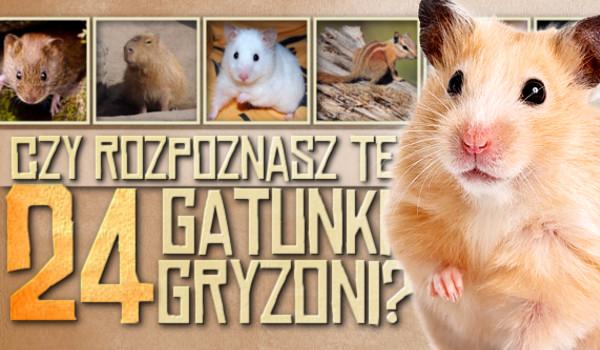 Czy rozpoznasz te 24 gatunki gryzoni?