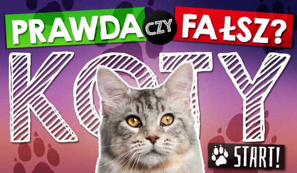 Prawda czy fałsz – Koty!